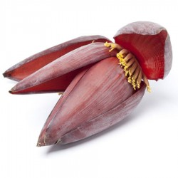 Banana Flower (Mocha) - 1 Pcs