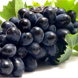 Black Grapes 500 gms