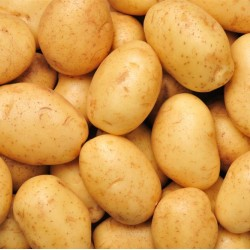 POTATO (Chandramuki) (1KG)